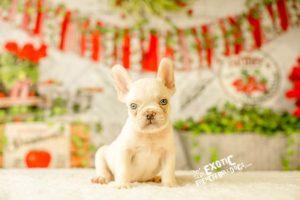 Winnie_boypup_4