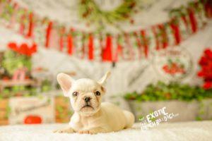 Winnie_girlpup2_4